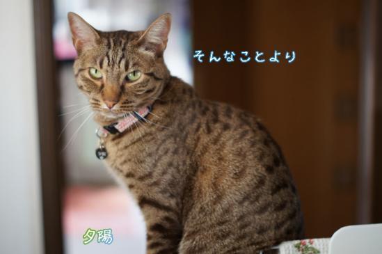 2_20120427093602.jpg