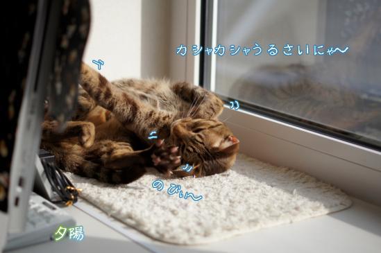 2_20120501070118.jpg