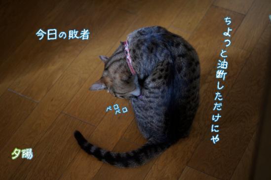 2_20120506082603.jpg