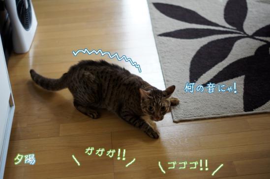 2_20120514073005.jpg