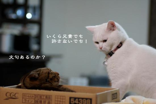 2_20120614071136.jpg