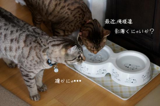 2_20120826221033.jpg