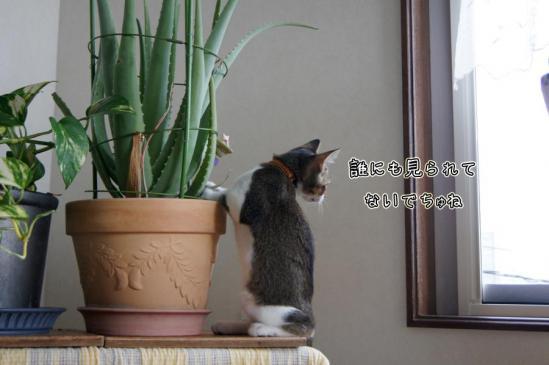 2_20120912102719.jpg