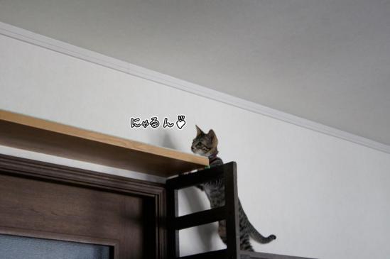 2_20120913075546.jpg