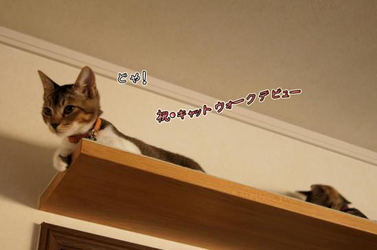 2_20120920085758.jpg