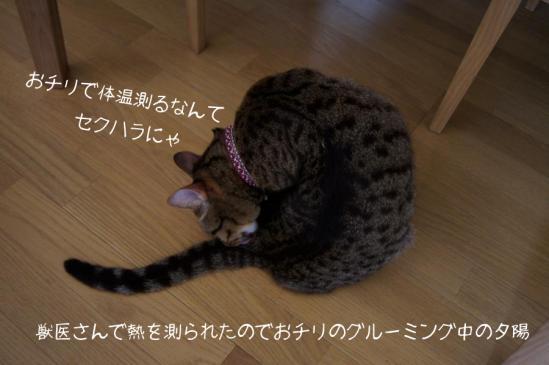 2_20121013110629.jpg