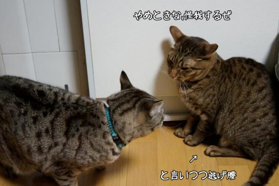 2_20121018080450.jpg