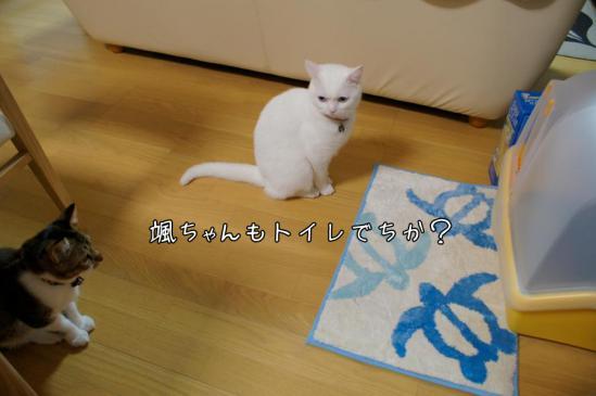 2_20121111011546.jpg