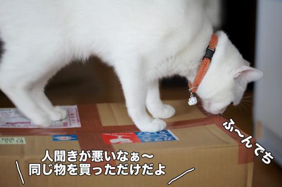 2_20121118213910.jpg