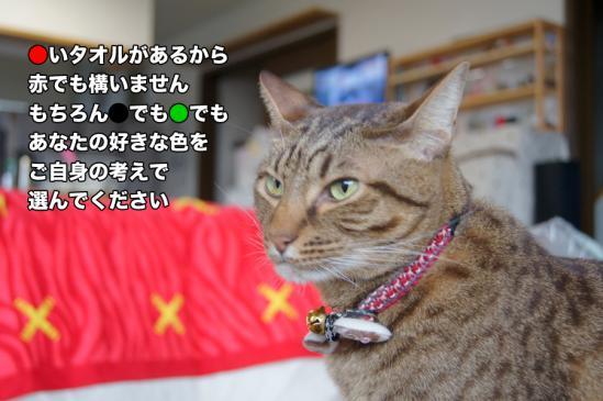 2_20121123102810.jpg