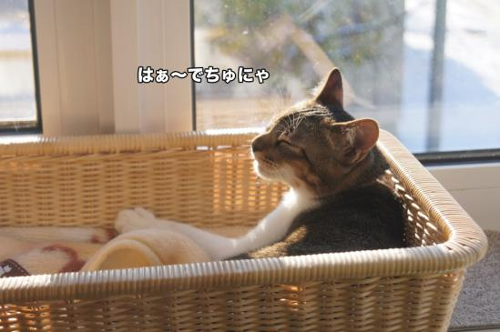 2_20121127010843.jpg
