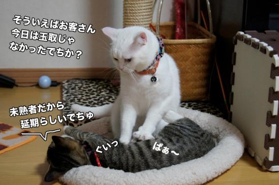 2_20121127195423.jpg