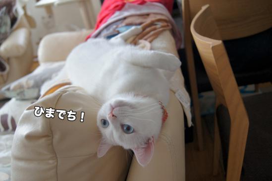 2_20121213071041.jpg