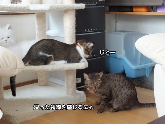 2_20121219083549.jpg