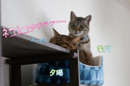 3_20120315093740.jpg