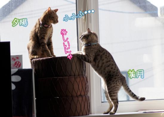 3_20120320000352.jpg