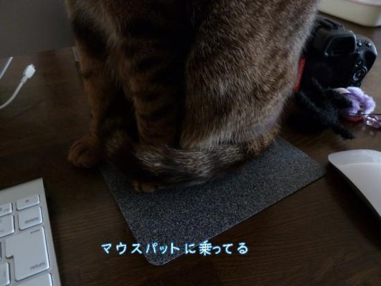 3_20120407233331.jpg