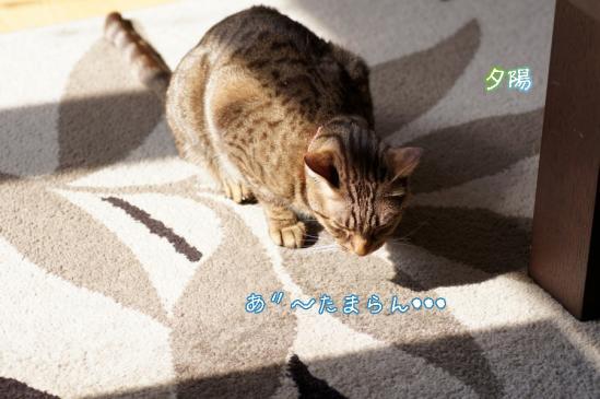 3_20120409080604.jpg