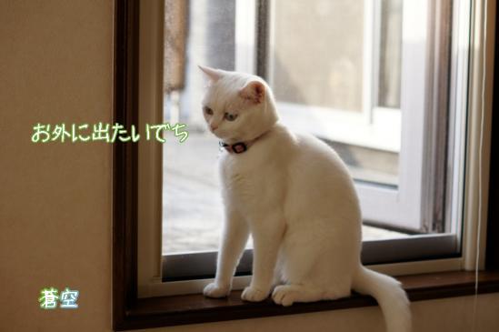 3_20120411071913.jpg