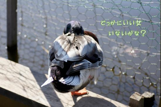 3_20120504232012.jpg