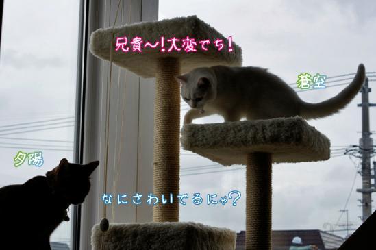 3_20120508072705.jpg