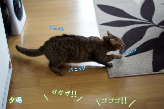 3_20120514073004.jpg