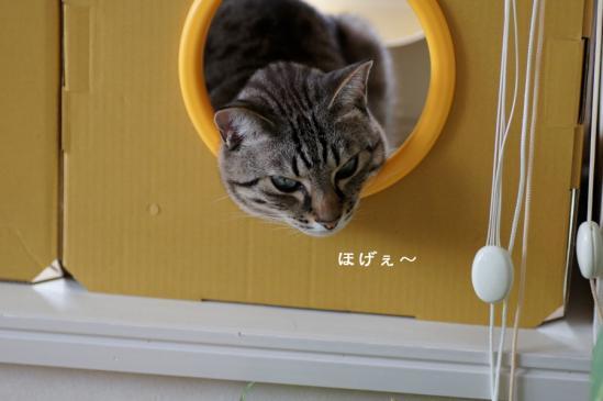 3_20120613071910.jpg