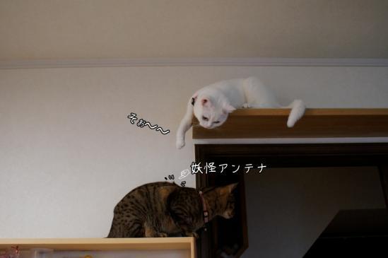 3_20120807083011.jpg
