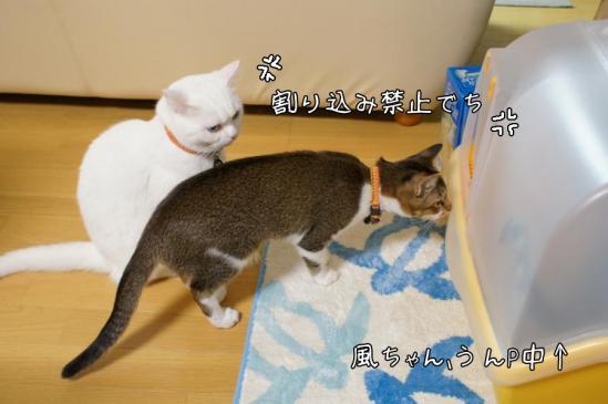 3_20121111011549.jpg