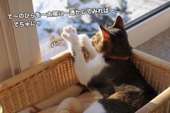3_20121127010845.jpg