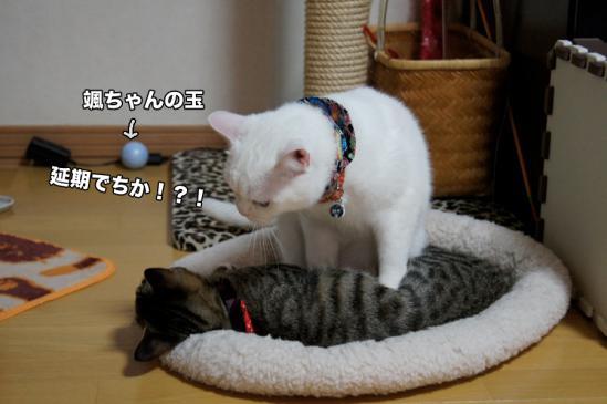 3_20121127195425.jpg