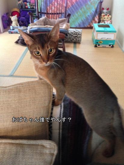 3_20121206062521.jpg