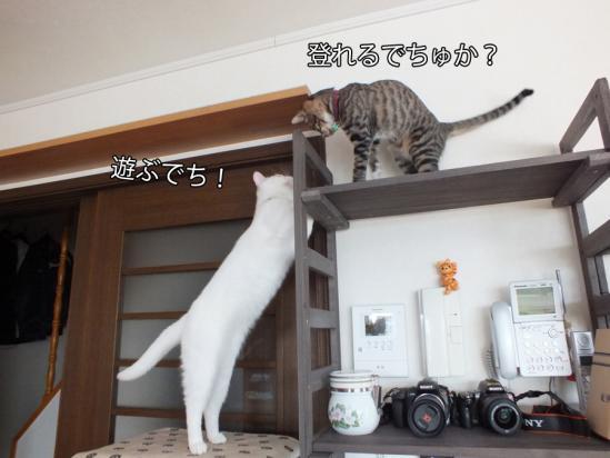 3_20121215082744.jpg