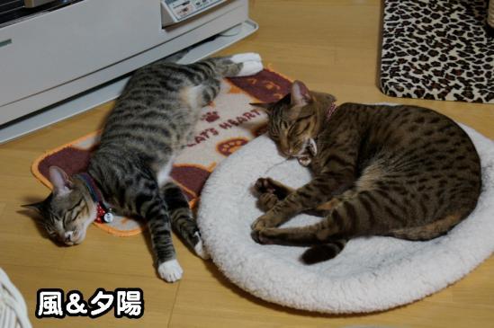 3_20121218090535.jpg