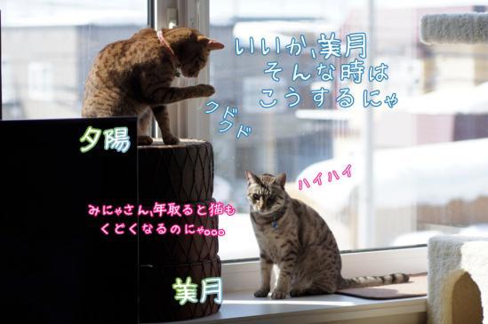 4_20120310194407.jpg