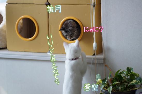 4_20120316001252.jpg