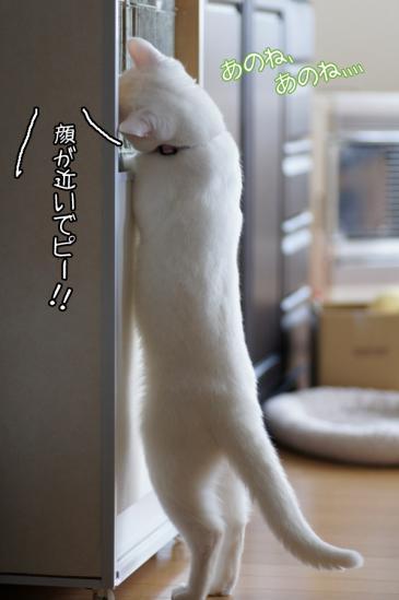 4_20120317224730.jpg
