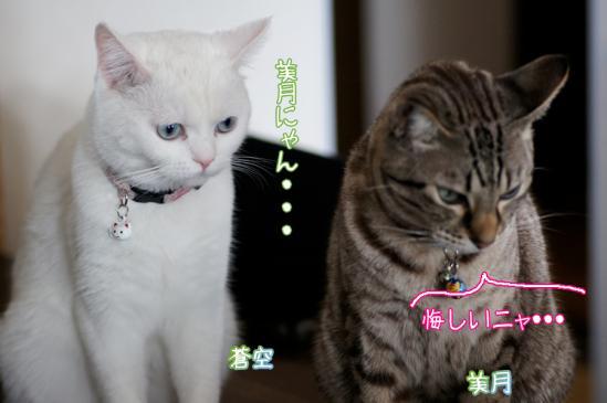 4_20120320000351.jpg