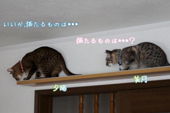 4_20120324084740.jpg