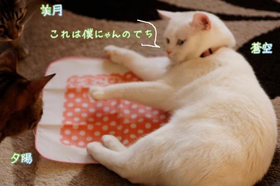 4_20120328071231.jpg