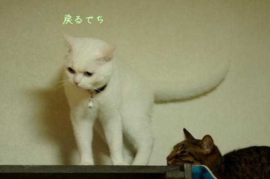4_20120329085114.jpg
