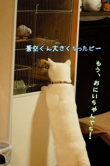 4_20120330231420.jpg