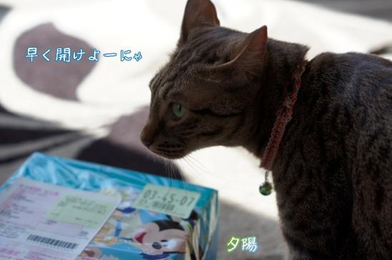 4_20120427093559.jpg
