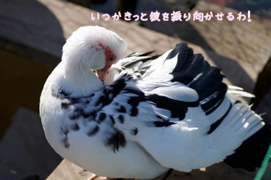 4_20120504232011.jpg