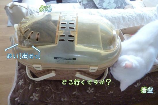4_20120511232654.jpg