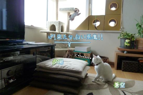 4_20120522081804.jpg