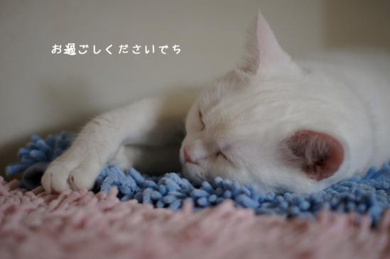 4_20120527075612.jpg