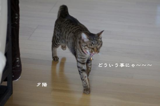 4_20120615083734.jpg