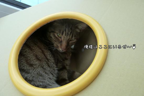 4_20120705080943.jpg