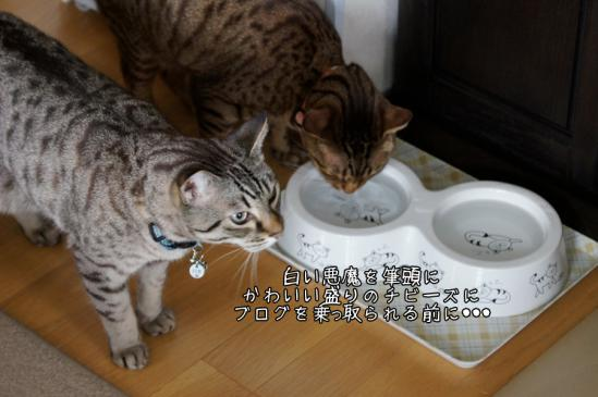 4_20120826221033.jpg